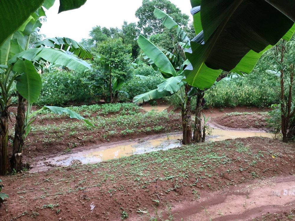 Kenya,+Permaculture,+Michael+Nickels,+PPIK