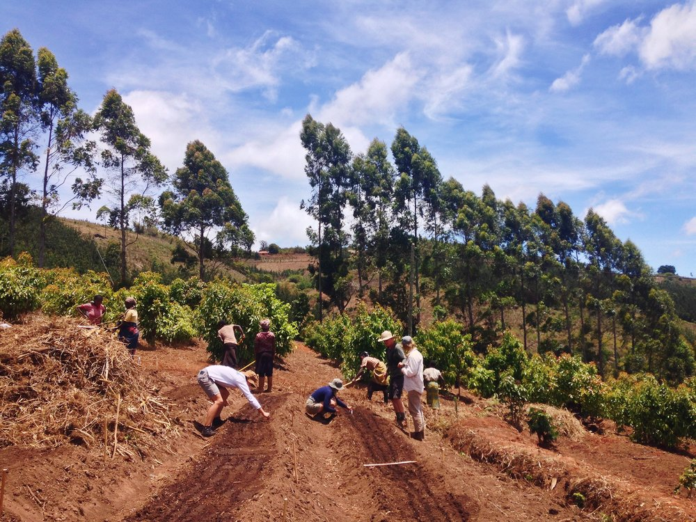 Tanzania,+Permaculture,+Michael+Nickels,+PPIT