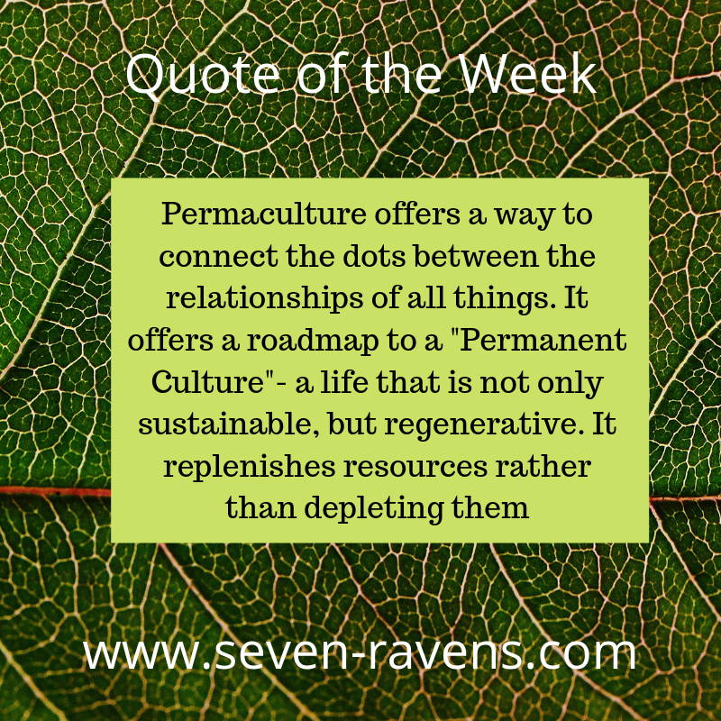 Copy of Quote of the Week